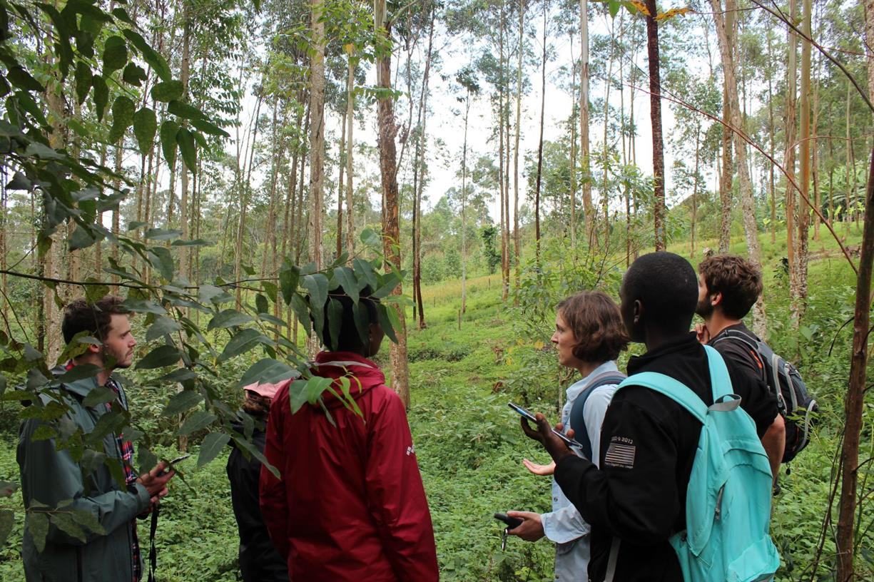 The Forest, The Trees, and How We See Them: Perspectives on a tree planting boom in Uganda