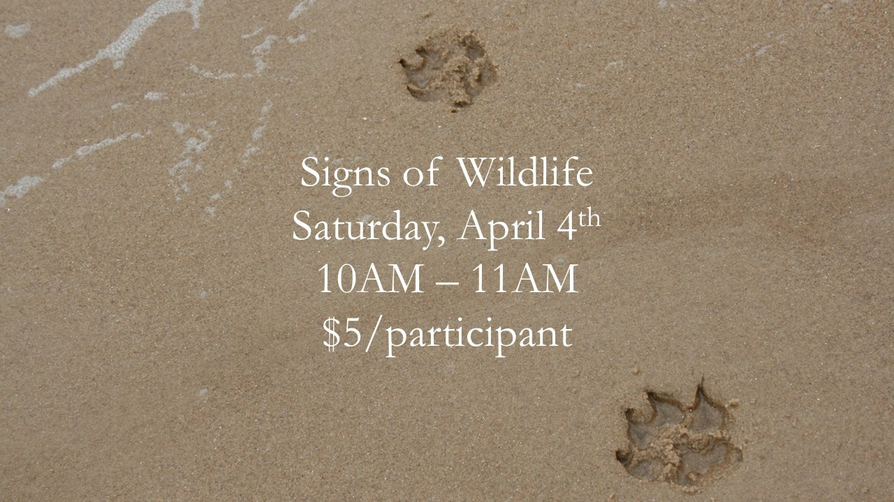 Signs of Wildlife
