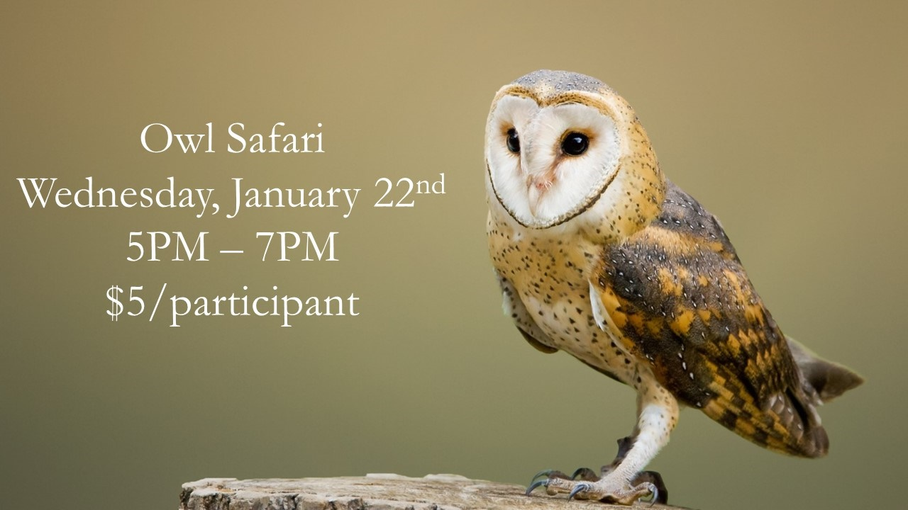 Owl Safari
