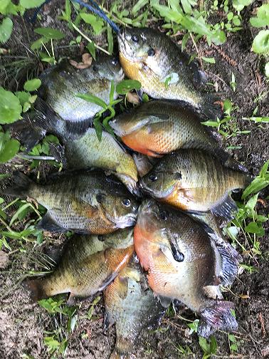 Guided Fishing - Creek
